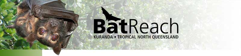 BatReach header Logo